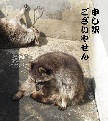 0319raccoon.jpg