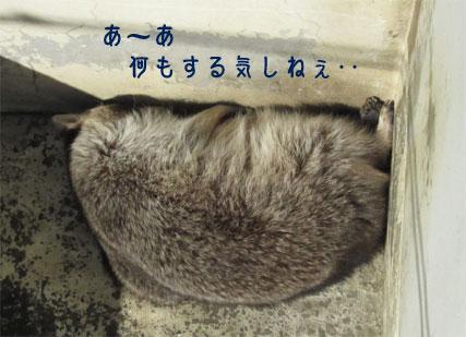 raccoon0605.jpg